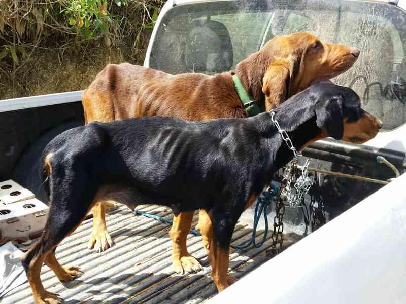 Animais resgatados durante a fiscalização do IMA em Quebrangulo, AL, foram levados para uma ONG — Foto: IMA-AL/Divulgação