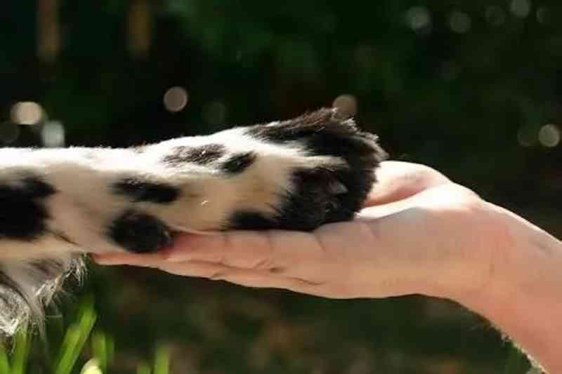 Grupo de proteção de animais em Amargosa precisa de ajuda para manter o trabalho