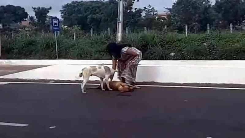 Em vídeo nas redes sociais, cachorro tenta proteger seu amigo atropelado em Juazeiro do Norte, CE