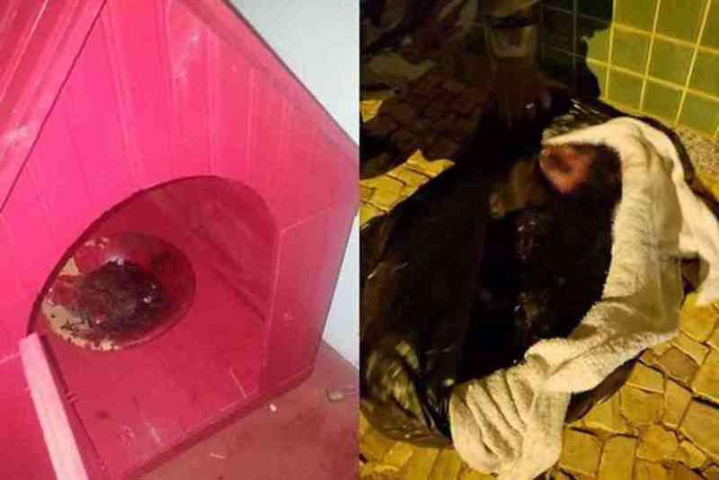 Na casa da cadela foi encontrada uma tigela com sangue (foto: Arquivo Pessoal)