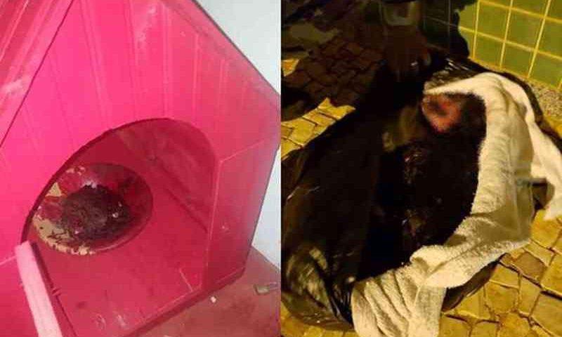 Na casa da cadela foi encontrada uma tigela com sangue. O animal já estava morto quando a polícia chegou ao local (foto: Arquivo pessoal)