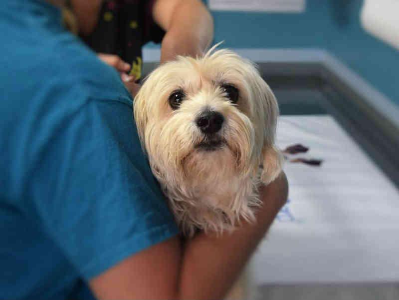 Nova regra dos Emirados Árabes Unidos (EAU): A incapacidade de cuidar de animais de estimação será punível por lei