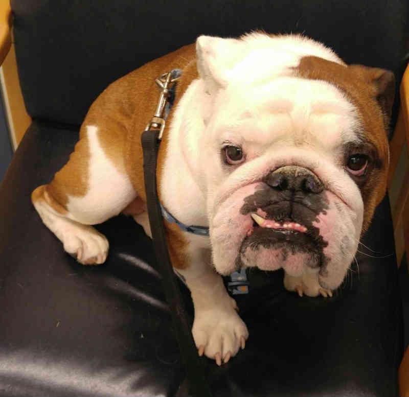 Empregado de loja de construção cria cadeira especial para ajudar cão dificuldades para se alimentar