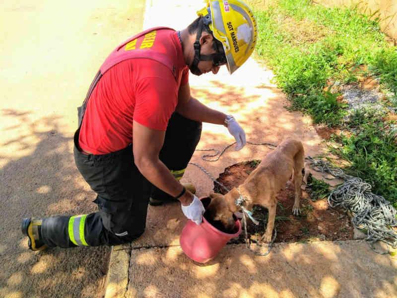 Após 8 dias desaparecido, cachorro é resgatado de dentro de buraco em Águas Lindas de Goiás
