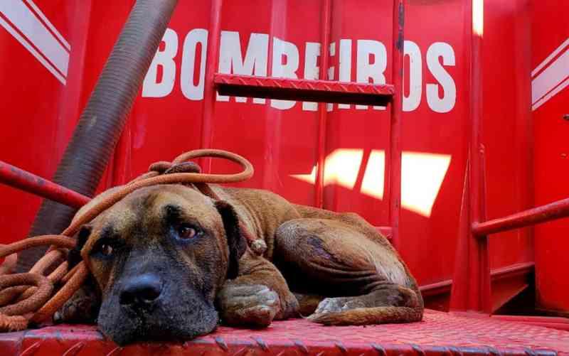 Bombeiros resgatam cachorro dentro de estação de tratamento de esgoto em Aruanã — Foto: Corpo de Bombeiros/Divulgação