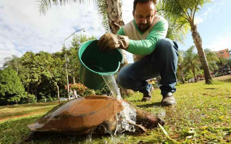 Tartaruga resgatada do Parque Vaca Brava, em Goiânia — Foto: Diomício Gomes/O Popular