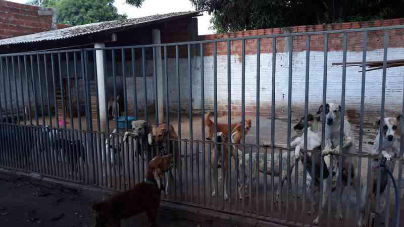 Abrigo de cães abandonados faz campanha de adoção — Foto: Divulgação/Lar de Naná