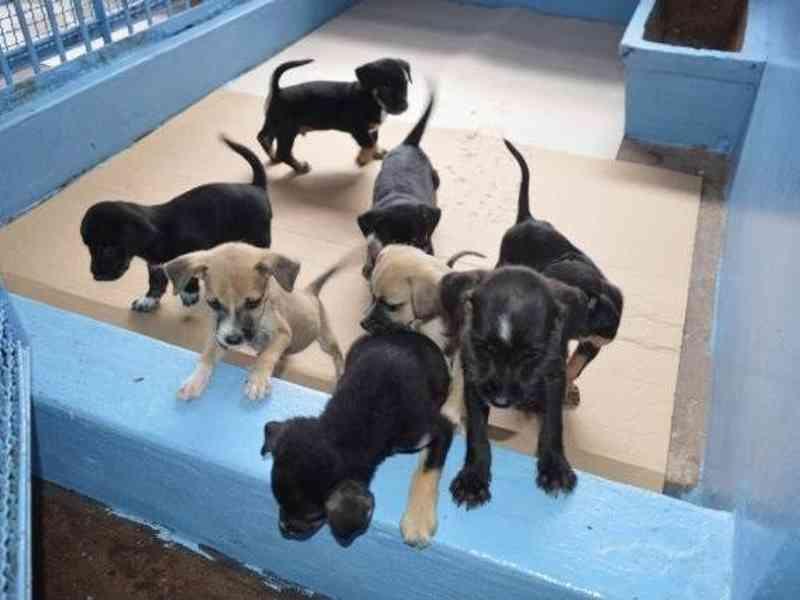 Filhotes no CCZ. (Foto: Arquivo/Campo Grande News)