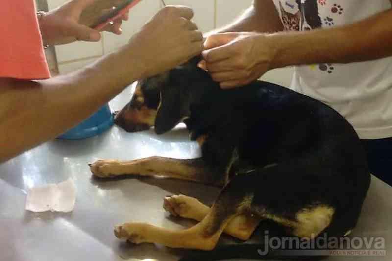 Cãozinho foi socorrido por voluntários, mas morreu Foto: Reprodução Jornal da Nova