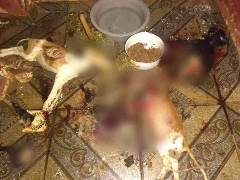 A polícia investiga a morte dos animais. (Foto: Divulgação)