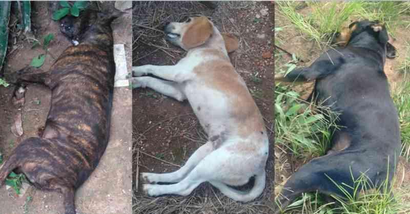Três dos animais encontrados mortos — Foto: Arquivo pessoal
