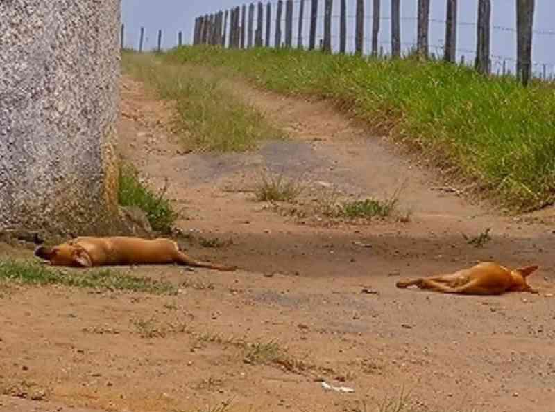 Moradoras registram ocorrência após morte de cachorros, suspeita é de que ao menos 15 tenham sido envenenados em Alta Floresta, MT