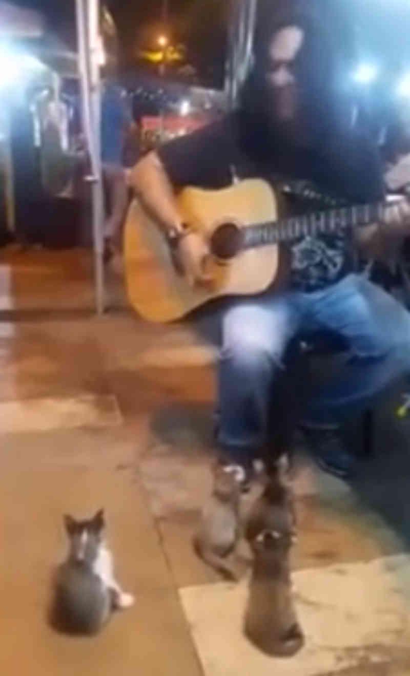 O músico de rua estava pronto para ir embora. Em seguida, aparece o público mais fofo do mundo
