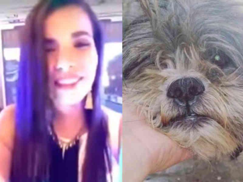 Mulher atropela cachorro e zomba do ocorrido no Facebook