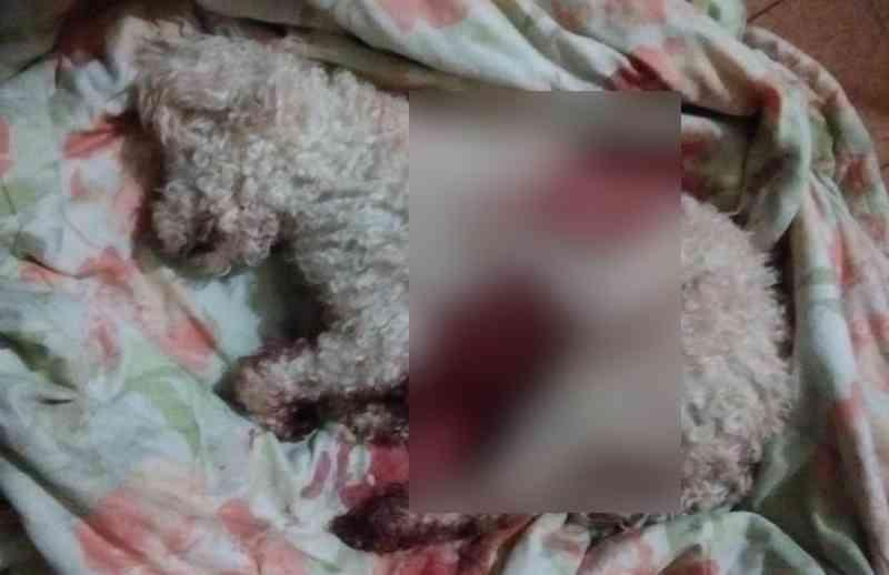 Suspeito de matar cadela a facadas em Catolé do Rocha (PB) se apresenta e alega esquizofrenia