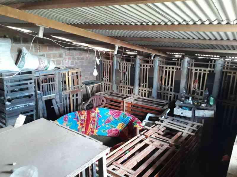 Polícia Civil desativa rinha em Saloá (PE), suspeito é detido e 34 aves são apreendidas