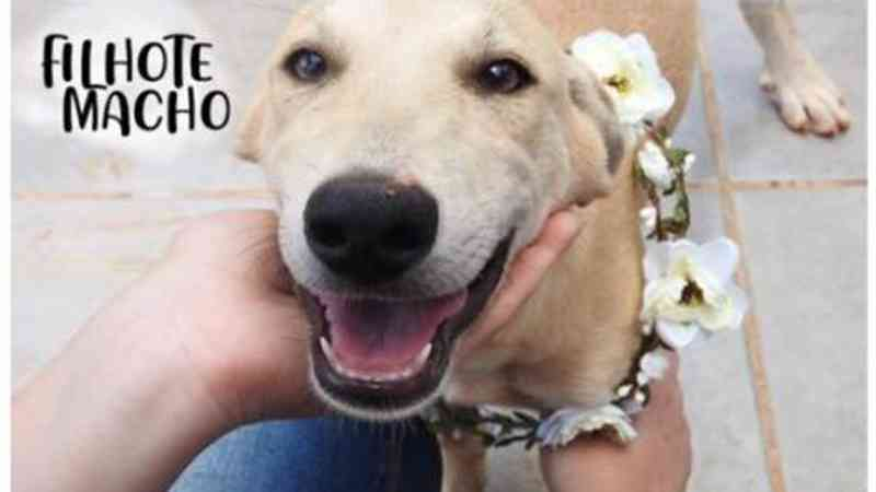 ONG está com dezenas de cães disponíveis para adoção em Cascavel, PR
