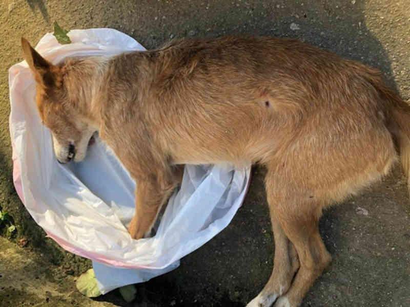 Cão abatido a tiro provoca revolta em Penacova, Portugal