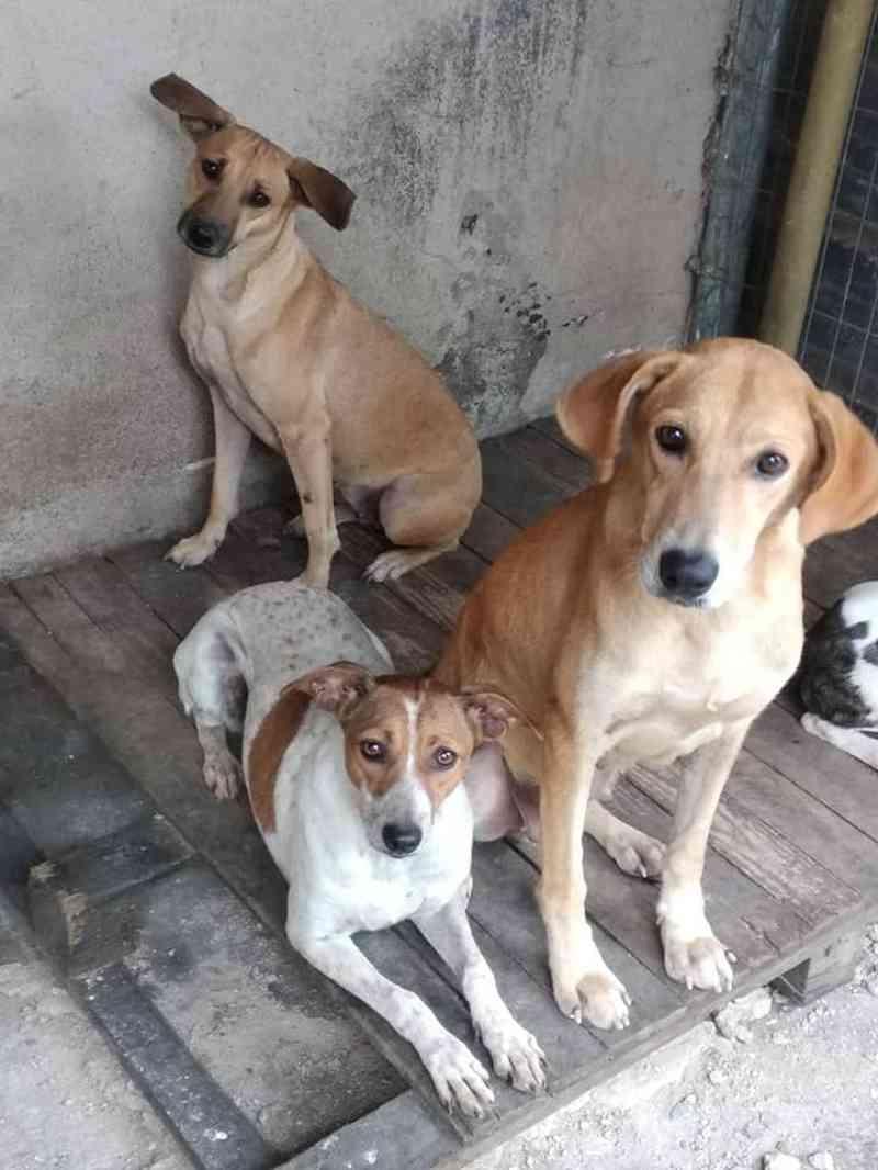 Associação Barramansense de Proteção de Animais APA-BM de Barra Mansa faz campanha para doações — Foto: Divulgação/APA-BM