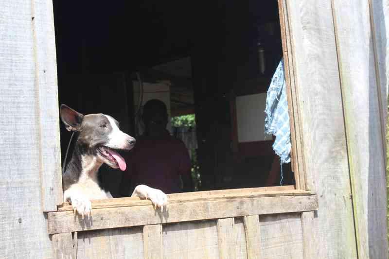 Por falta de espaço, alguns animais ficam dentro da residencia do idoso — Foto: Cássia Firmino/G1