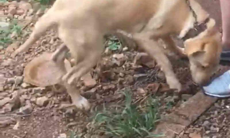 Cadela é resgatada após mulher descobrir vídeos onde o companheiro aparece cometendo zoofilia em Capinzal, SC