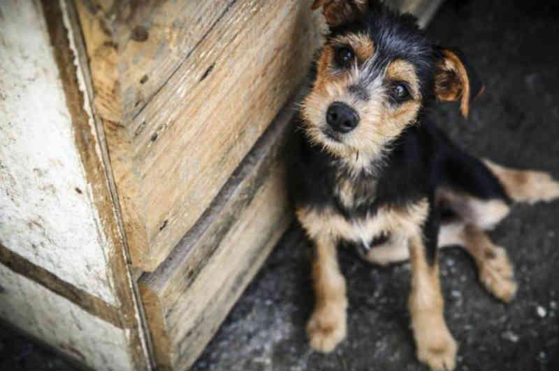 São José (SC) deverá implantar Centro de Bem-Estar Animal e Controle de Zoonoses em 2019