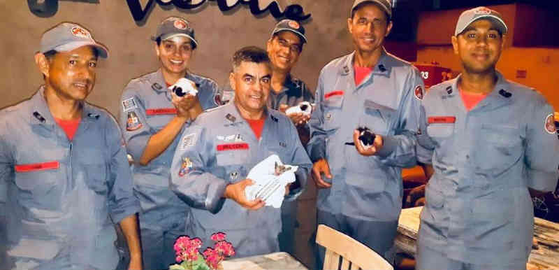 Bombeiros se guiam pelos miados e usam até câmera para resgatar gatinhos presos em canos em Mogi das Cruzes, SP; assista