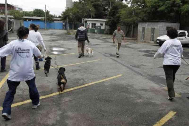 Voluntários levam cães do Centro de Zoonoses para passear aos domingos em SP