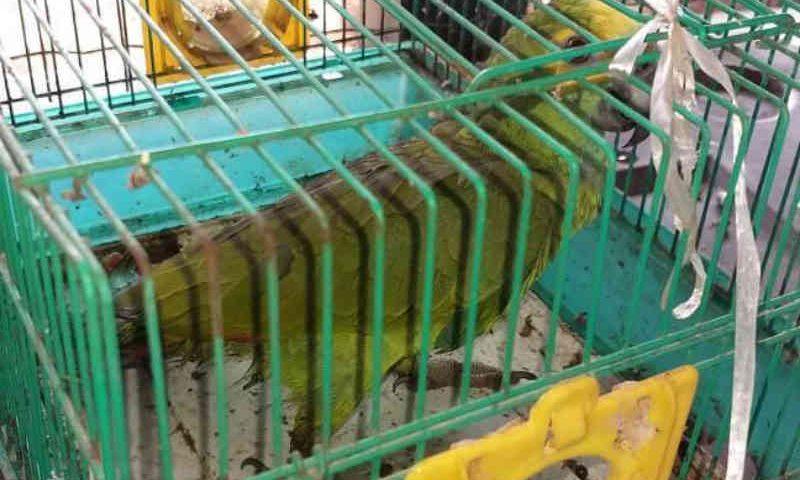 Naturatins recebe cerca de 50 animais abandonados recuperados em residência de Palmas, TO