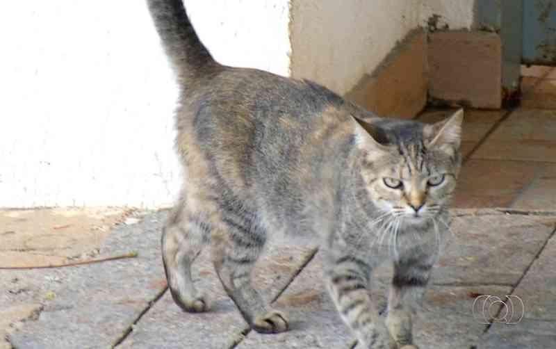 Moradores suspeitam que animais estejam sendo envenenados — Foto: Reprodução/TV Anhanguera