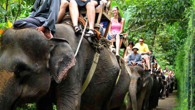 Turismo cruel: 15 atrações turísticas que maltratam os animais
