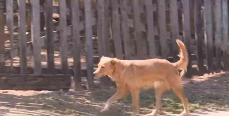 Campanha vai debater maus-tratos contra animais — Foto: Reprodução