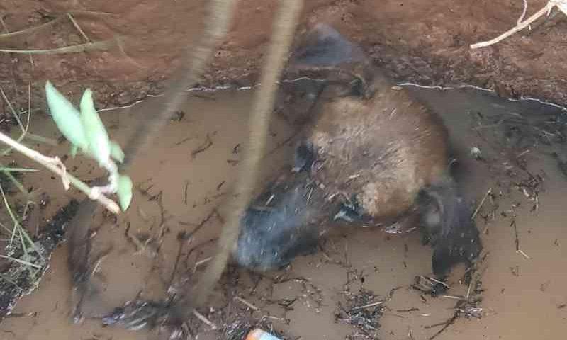 Cachorro caiu em poço abandonado em bairro de Rio Branco — Foto: Divulgação/Corpo de Bombeiros