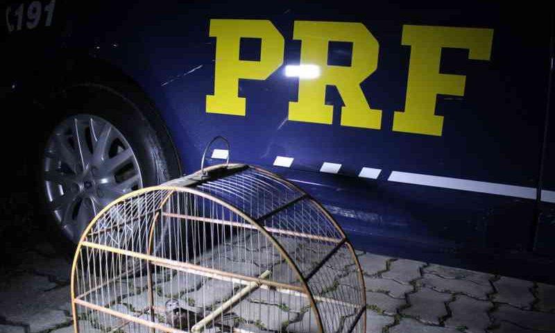 PRF encontrou os animais após denúncias — Foto: Rickardo Marques/G1 AM