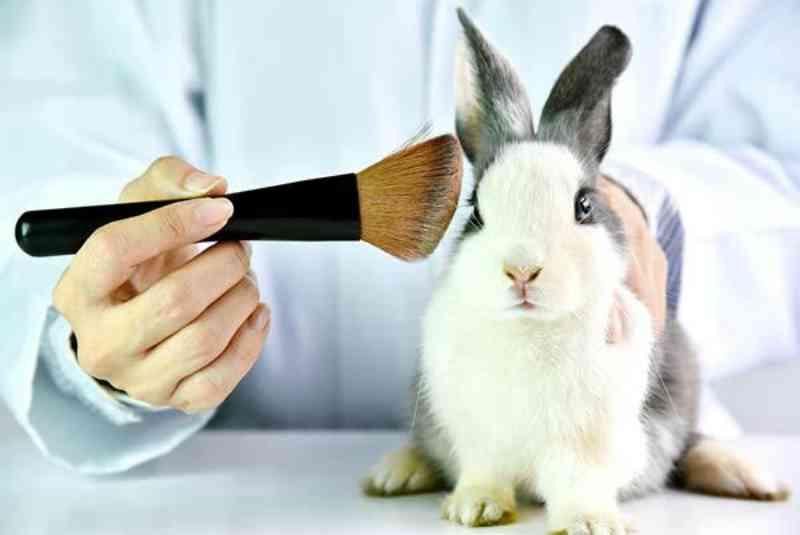 Notícia oficial: Austrália aprova lei pelo fim dos testes cosméticos em animais!