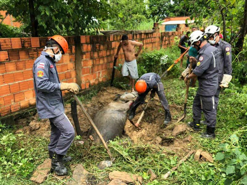 Égua é resgatada por bombeiros após cair em fossa de cinco metros de profundidade na BA; animal ficou ferido