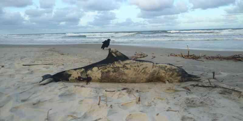 Golfinho é encontrado morto em praia do sul da Bahia; suspeita é que ele tenha se prendido em rede de pesca