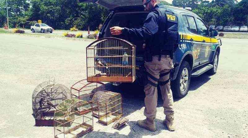 PRF flagra crime e resgata animais silvestres em Itabuna, BA