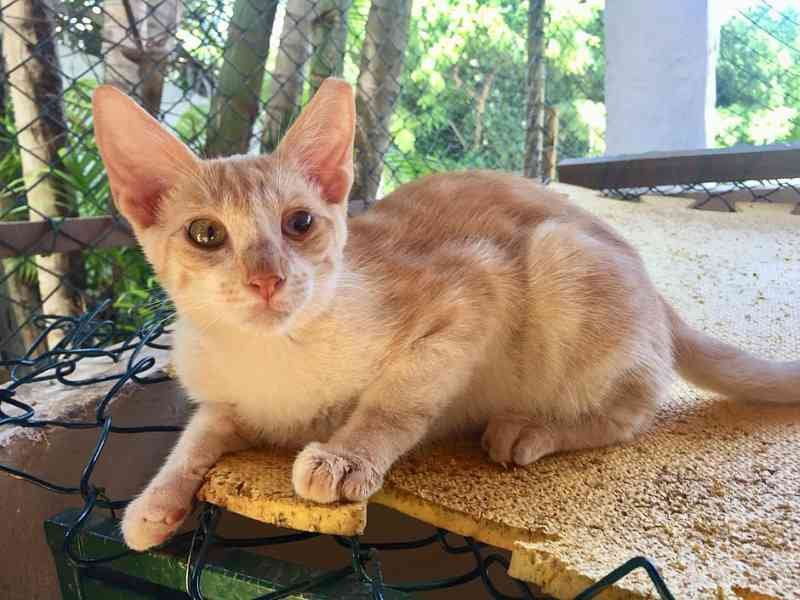 ONG promove evento de adoção com animais especiais neste domingo (24) em Salvador, BA