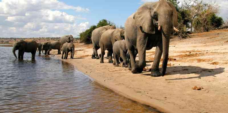 Botswana legaliza caça aos animais selvagens