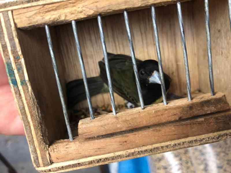 Mais de 140 pássaros foram apreendidos na Feira da Parangaba, em Fortaleza