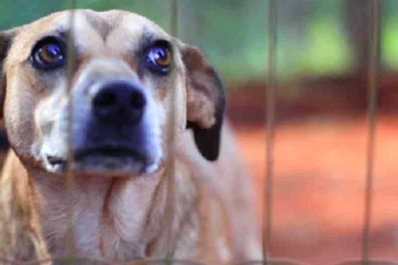 Entra em vigor lei que cria dia de combate aos maus-tratos a animais no Ceará