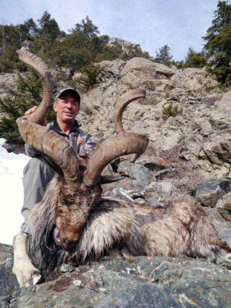 Caçador de troféu paga US$ 100 mil para matar a cabra selvagem mais rara