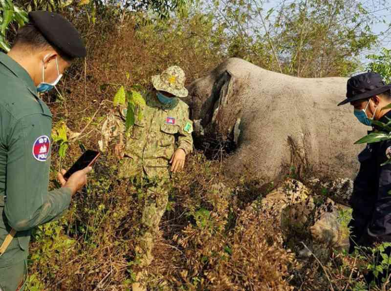 Caçadores matam elefante em reserva natural do Camboja