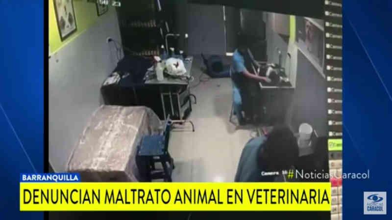 Vídeo mostra como funcionário de clínica veterinária quase mata um cachorro, se arrepende e tenta reanimá-lo