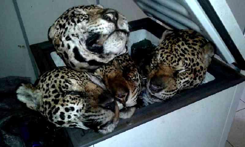 Matança à vista? Deputado e veterinário Onyx Lorenzoni desarquiva PL que permite a regulamentação da caça por municípios