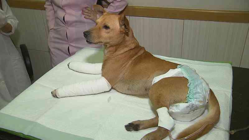 Cachorro foi levado para hospital veterinário com fraturas nas patas — Foto: TV Globo / Reprodução