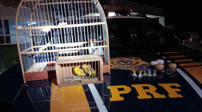 Morador de Trindade é preso pela PRF transportando animais silvestres e galos explorados em rinhas, em Brasília
