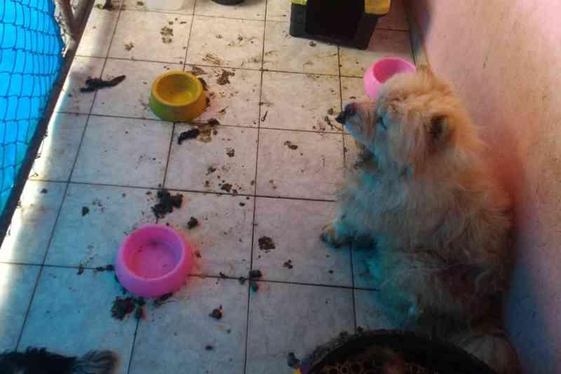 Polícia encontra cachorros maltratados e filhotes mortos em casa no DF