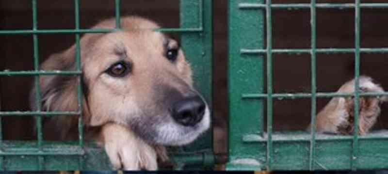 Abrigos de Vila Velha (ES) que cuidam de animais abandonados podem ficar isentos de IPTU